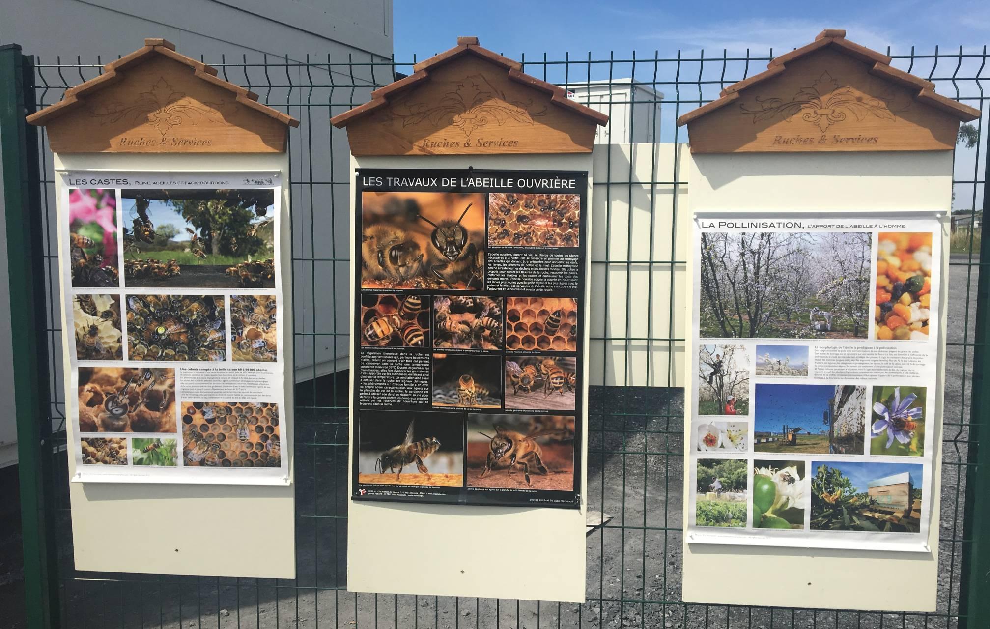 abeilles société JAMART