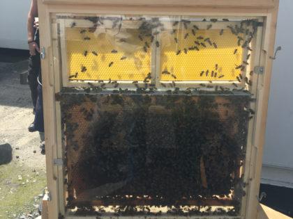 JAMART agit pour la biodiversité locale avec ses abeilles!